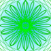 peacock0803sz
